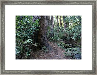 Magical Path Through The Redwoods On Mount Tamalpais Framed Print by Ben Upham III