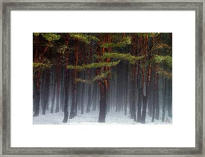 Magical Pines Framed Print