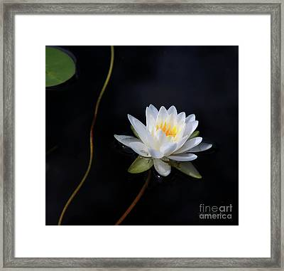 Framed Print featuring the photograph Magical Water Lily by Michelle Wiarda