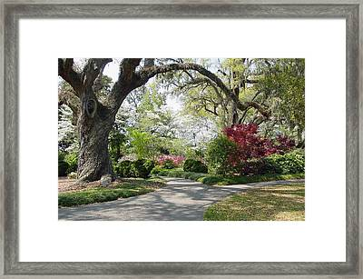 Magical Wonderland Framed Print