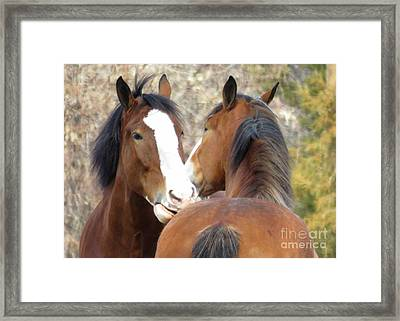 Magnificant Horses -the Clydesdales-10 Framed Print by Diane M Dittus
