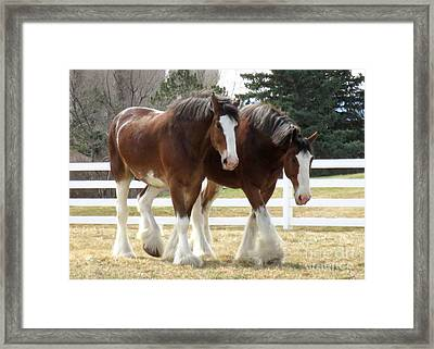 Magnificant Horses - The Clydesdales -9 Framed Print