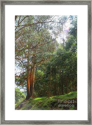 Framed Print featuring the photograph Magnificent Maui by DJ Florek