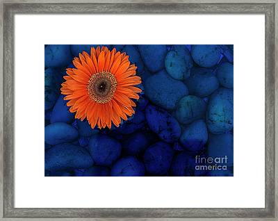 Magnificent Orange Framed Print