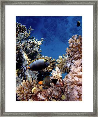 Magnificent Red Sea World Framed Print