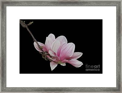 Magnolia #2 Framed Print