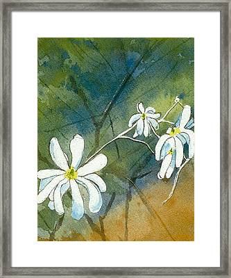 Magnolia 3 Of 3 Framed Print