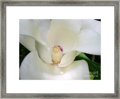 Magnolia Framed Print by Addie Hocynec