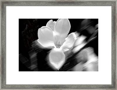 Magnolia Black And White Abstract Framed Print by Craig Perry-Ollila