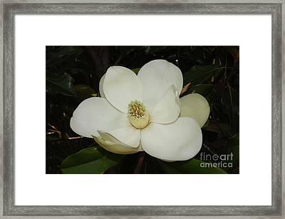 Magnolia Blossom 5 Framed Print