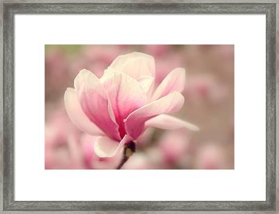 Magnolia Blossom Framed Print by Jessica Jenney