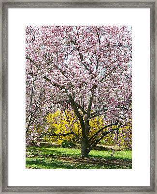 Framed Print featuring the photograph Magnolia Blossoms Galore by Emmy Marie Vickers