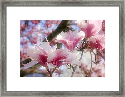 Magnolia Blossoms Framed Print by Sandy Keeton