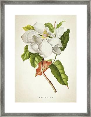 Magnolia Botanical Print Framed Print