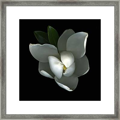 Magnolia Framed Print by Christian Slanec