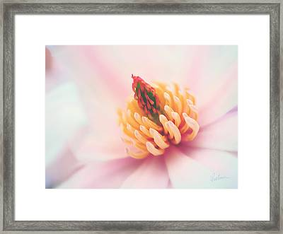 Magnolia Crown Framed Print