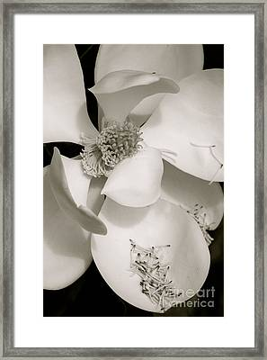 Magnolia Drama In Black And White Framed Print by Carol Groenen