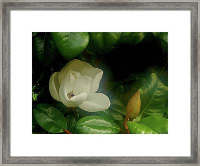 Magnolia Framed Print by Evelyn Tambour