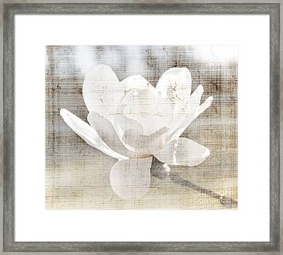 Magnolia Flower Framed Print by Elena Elisseeva