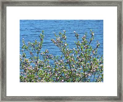 Magnolia Flowering Tree Blue Water Framed Print