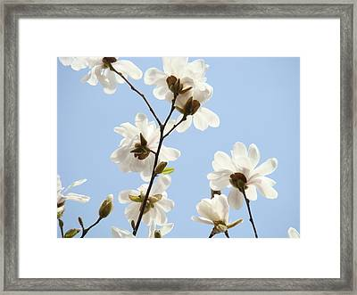 Magnolia Flowers White Magnolia Tree Flowers Art Spring Baslee Troutman Framed Print by Baslee Troutman