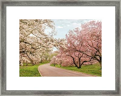 Magnolia Grove Framed Print by Jessica Jenney