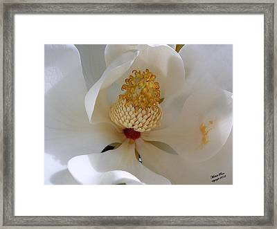Magnolia Happiness Framed Print