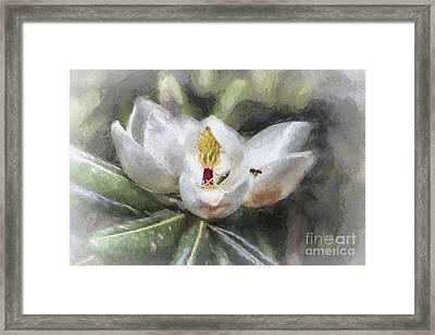 Magnolia Harvest Framed Print