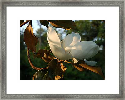 Magnolia Framed Print by Heather S Huston