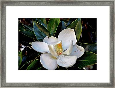 Framed Print featuring the photograph Magnolia by Helen Haw