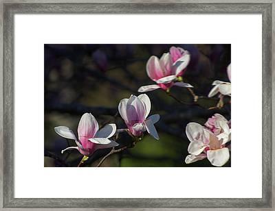 Magnolia Framed Print by Jerry LoFaro