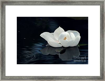 Magnolia Framed Print by Kendra Longfellow