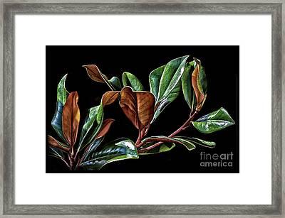 Magnolia Leaves Framed Print by Walt Foegelle