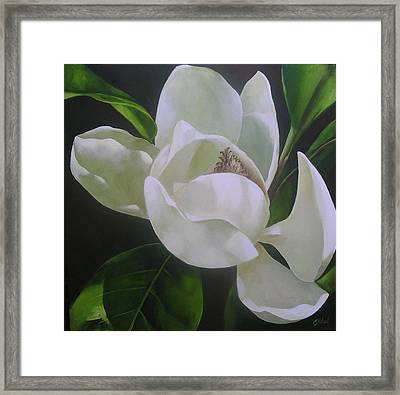 Magnolia Light Framed Print