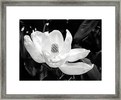 Magnolia Memories 3- By Linda Woods Framed Print by Linda Woods