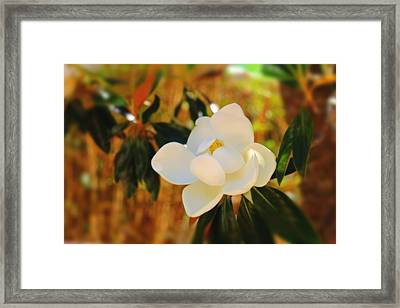 Magnolia Framed Print by Mindy Newman
