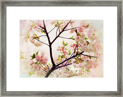 Framed Print featuring the photograph Asian Cherry Blossoms by Jessica Jenney