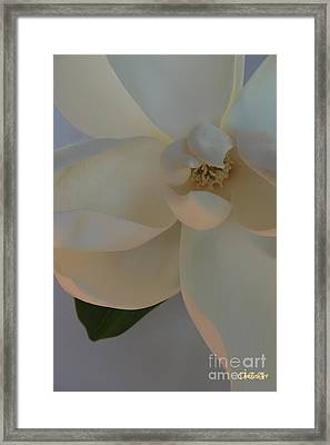 Moody Magnolia  Framed Print