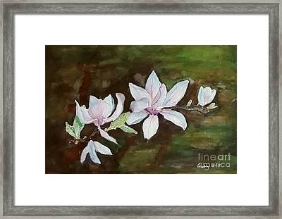 Magnolia - Painting  Framed Print by Veronica Rickard