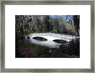 Magnolia Plantation Bridge Framed Print