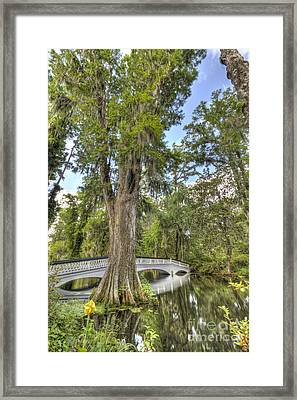 Magnolia Plantation Cypress Tree Framed Print by Dustin K Ryan