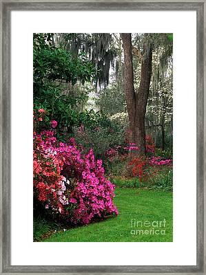 Framed Print featuring the photograph Magnolia Plantation - Fs000148a by Daniel Dempster