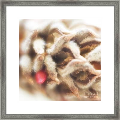 Magnolia Seedpod Framed Print