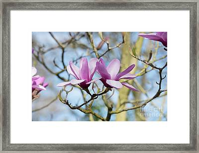 Framed Print featuring the photograph Magnolia Serene Flowers by Tim Gainey