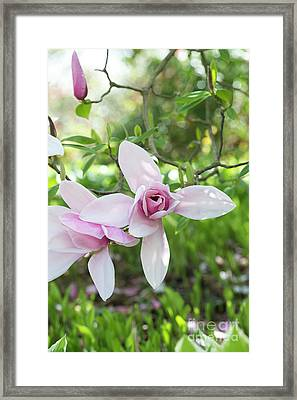 Framed Print featuring the photograph Magnolia Star Wars Flower by Tim Gainey