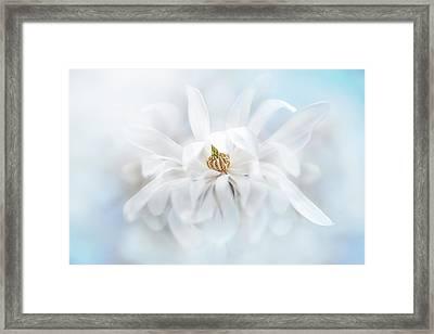 Magnolia Stellata Framed Print by Jacky Parker