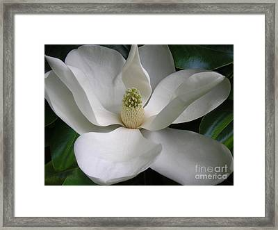 Magnolia Taking In The Light Framed Print by Lucyna A M Green