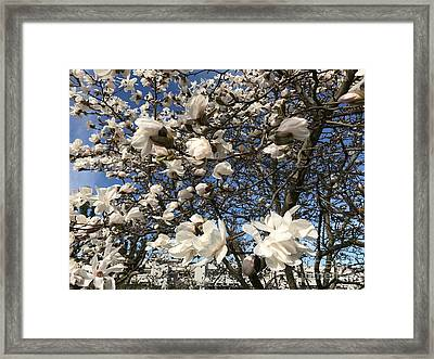 Framed Print featuring the photograph Magnolia Tree In Blossom by Patricia Hofmeester