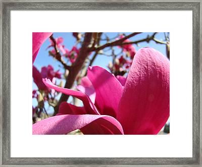 Magnolia Tree Pink Magnoli Flowers Artwork Spring Framed Print by Baslee Troutman