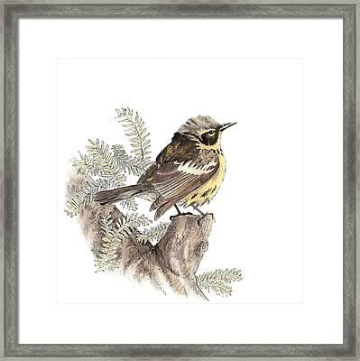 Magnolia Warbler Framed Print